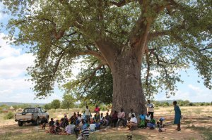 group of people participating in a training under a large baobab tree